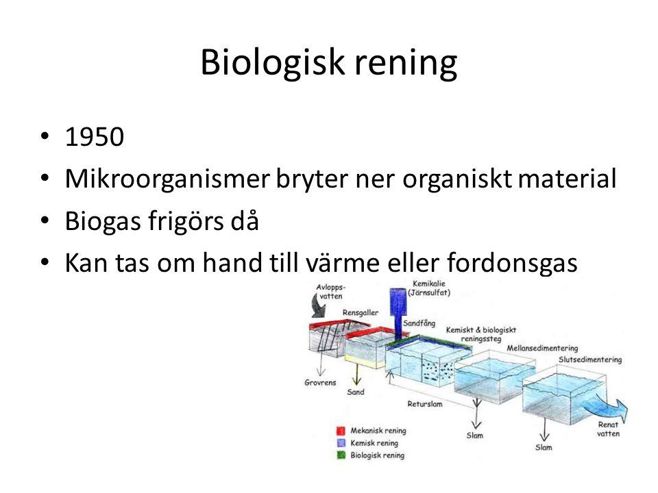 Biologisk rening 1950 Mikroorganismer bryter ner organiskt material