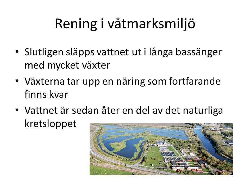 Rening i våtmarksmiljö