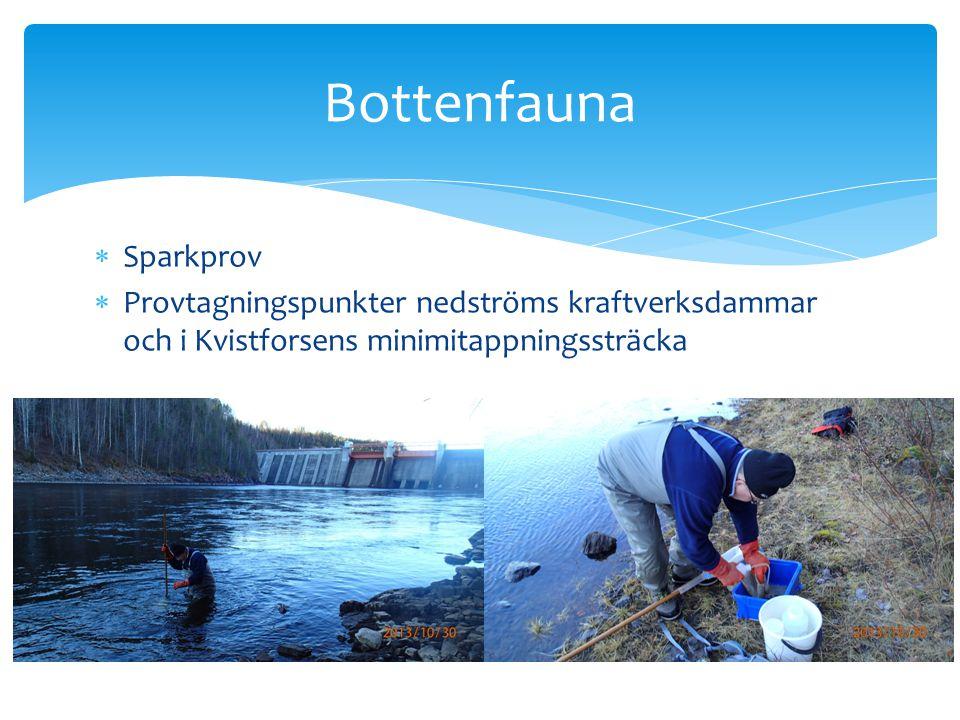 Bottenfauna Sparkprov