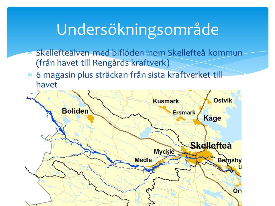 Undersökningsområde Skellefteälven med biflöden inom Skellefteå kommun (från havet till Rengårds kraftverk)