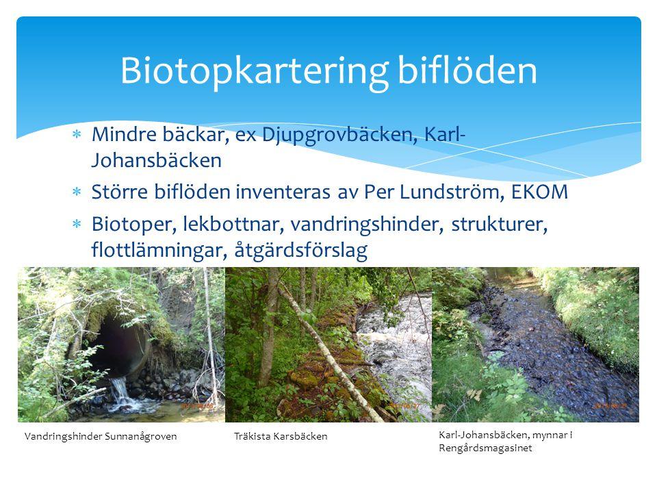 Biotopkartering biflöden
