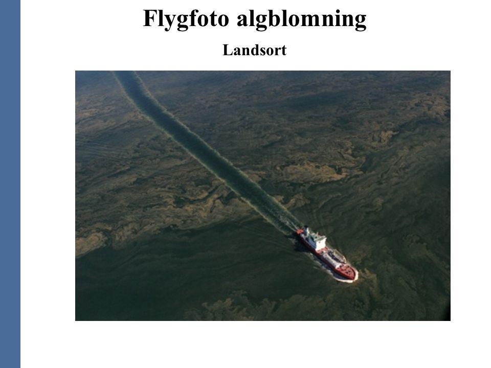 Flygfoto algblomning Landsort