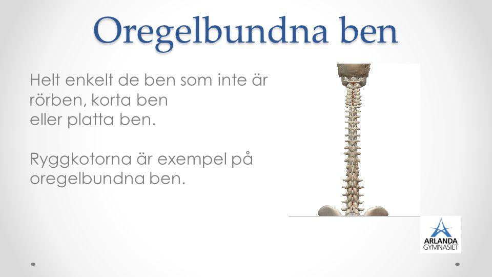 Sesamben Ovala fria ben som vanligtvis finns i musklernas senor.