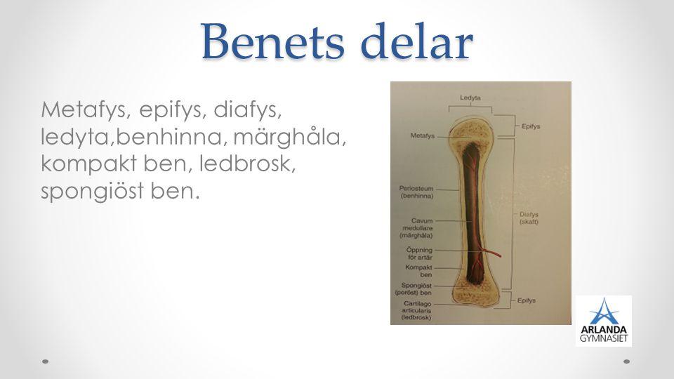 Leder Det ställe där två eller flera ben förenas kallas led.