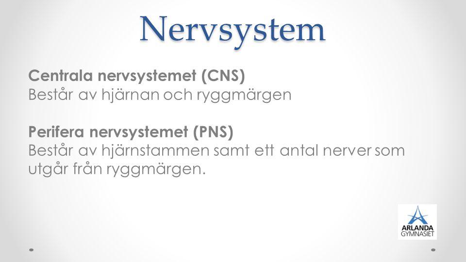 En nerv består av buntar av fibrer som förgrenas ut