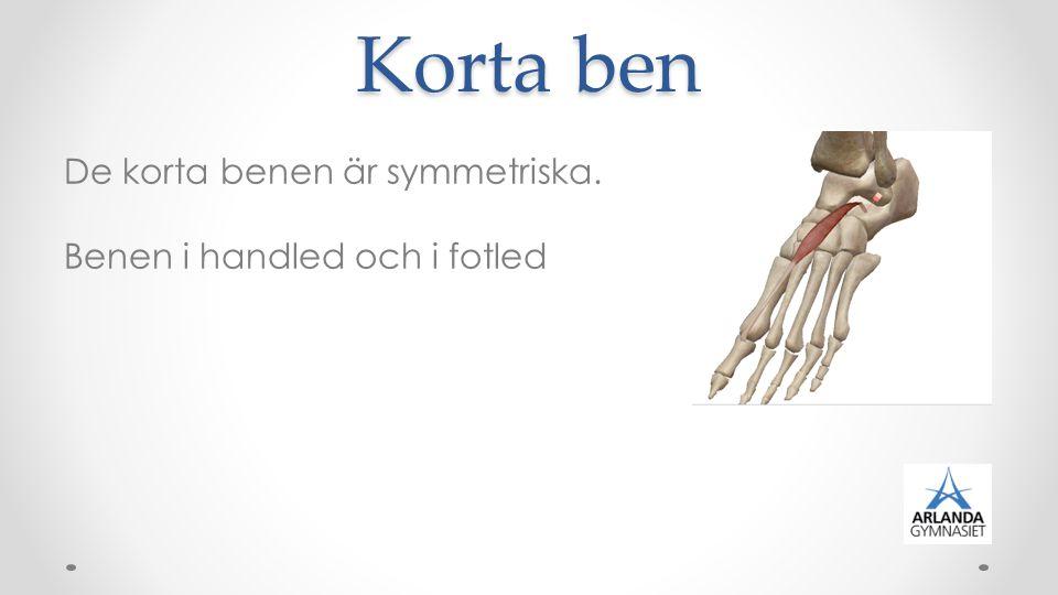 Platta ben Har fått sitt namn efter sin platta form.