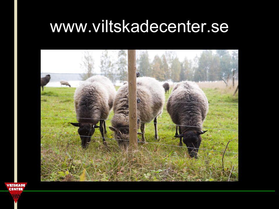 www.viltskadecenter.se