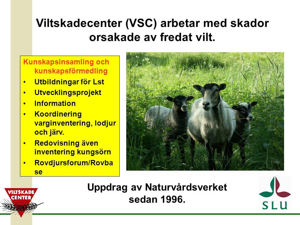 Viltskadecenter (VSC) arbetar med skador orsakade av fredat vilt.