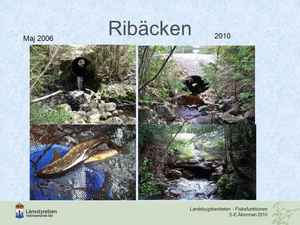 Ribäcken 2010 Maj 2006 Landsbygdsenheten - Fiskefunktionen S-E Åkerman 2010