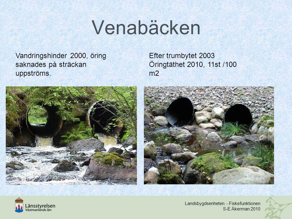 Venabäcken Vandringshinder 2000, öring saknades på sträckan uppströms.