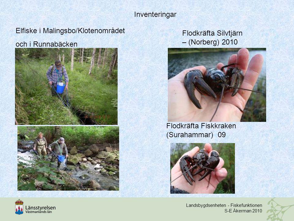 Elfiske i Malingsbo/Klotenområdet och i Runnabäcken