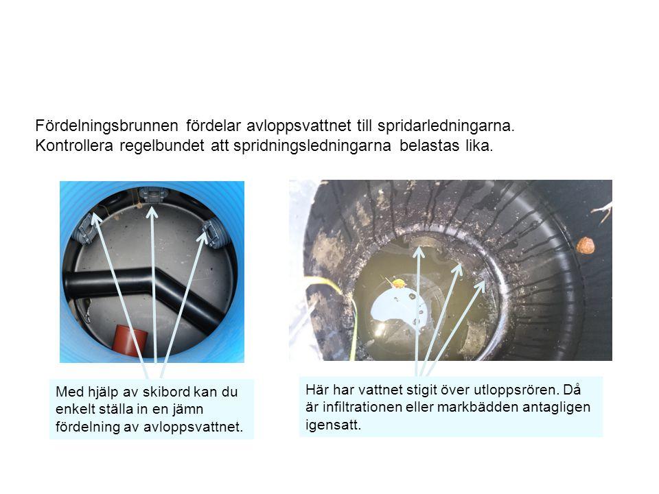 Fördelningsbrunnen fördelar avloppsvattnet till spridarledningarna.