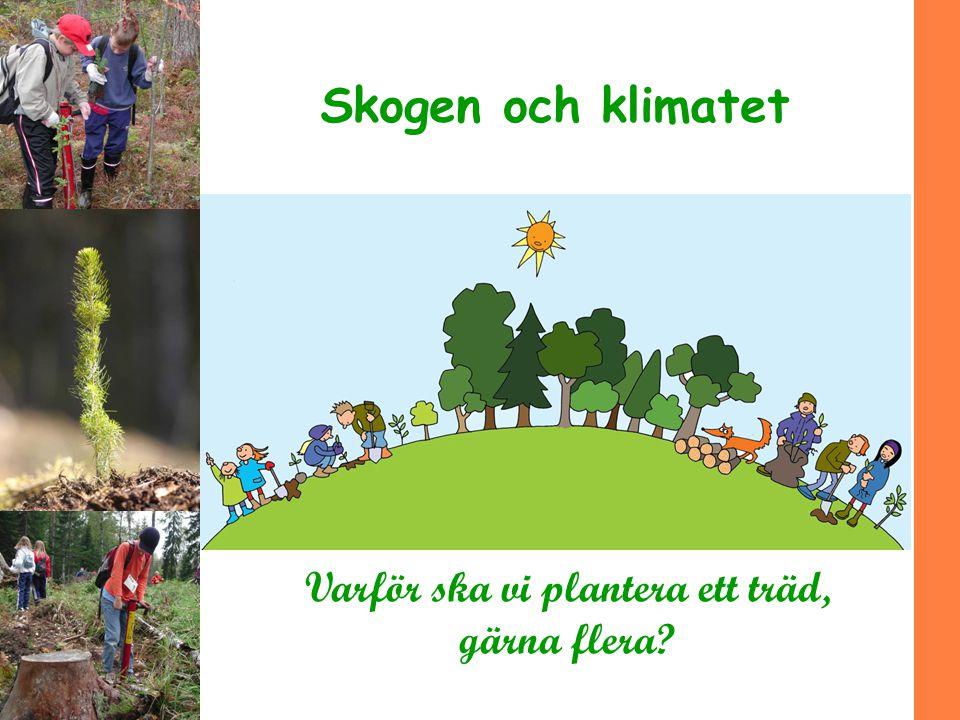 Varför ska vi plantera ett träd, gärna flera