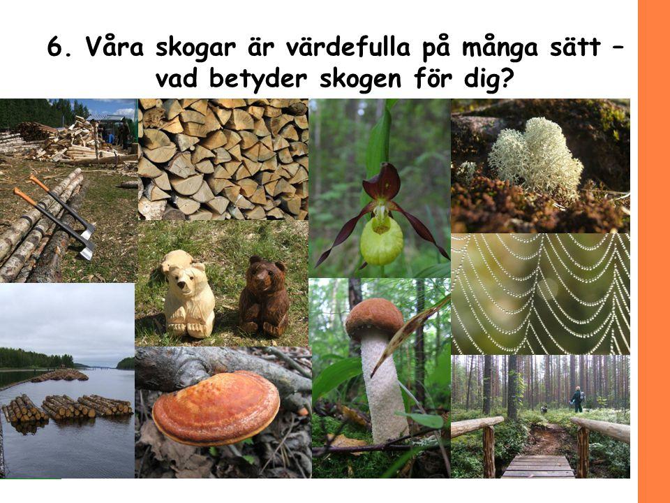 6. Våra skogar är värdefulla på många sätt – vad betyder skogen för dig