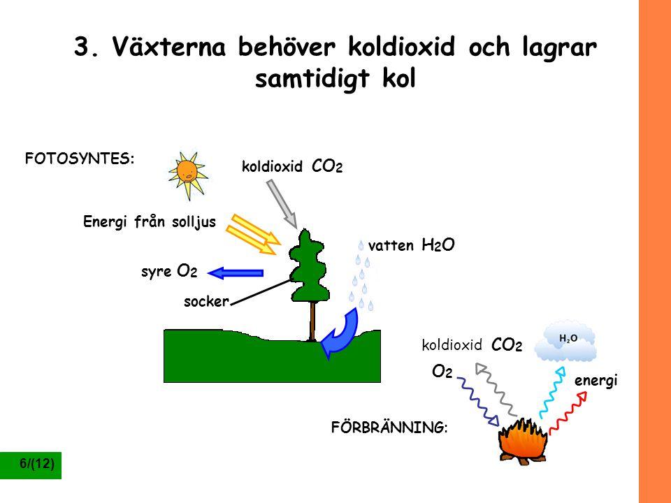3. Växterna behöver koldioxid och lagrar samtidigt kol
