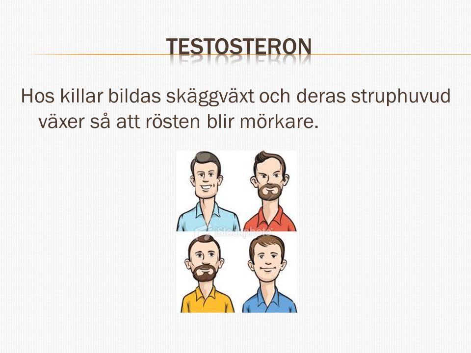 Testosteron Hos killar bildas skäggväxt och deras struphuvud växer så att rösten blir mörkare.