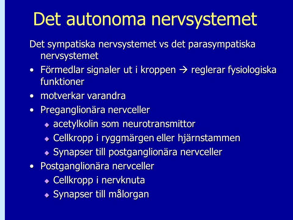 Det autonoma nervsystemet