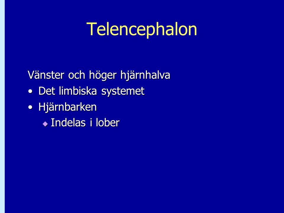 Telencephalon Vänster och höger hjärnhalva Det limbiska systemet