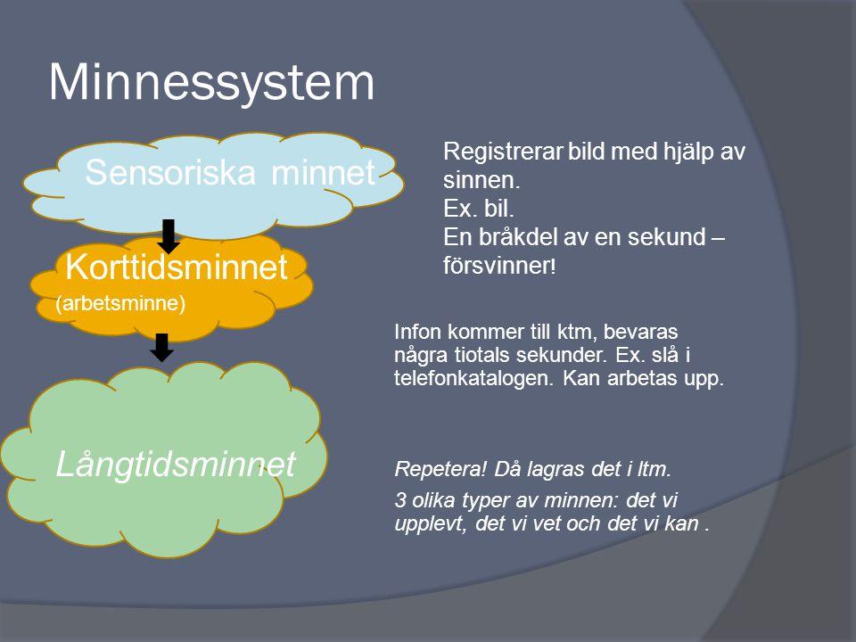 Minnessystem Sensoriska minnet Korttidsminnet