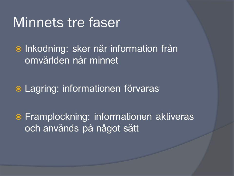 Minnets tre faser Inkodning: sker när information från omvärlden når minnet. Lagring: informationen förvaras.