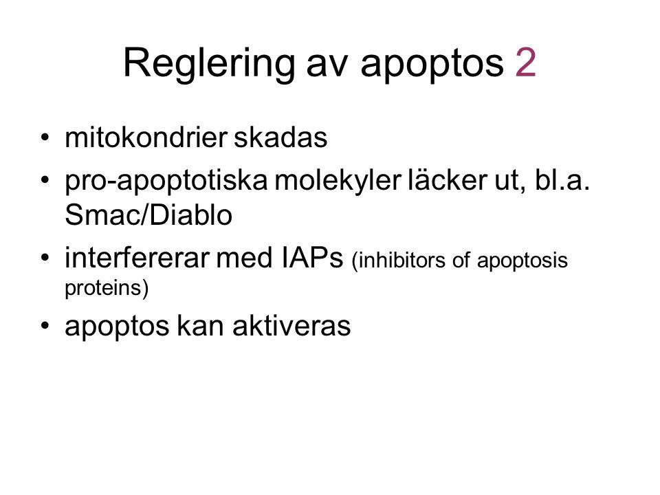 Reglering av apoptos 2 mitokondrier skadas