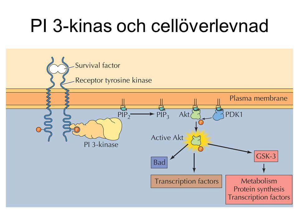 PI 3-kinas och cellöverlevnad