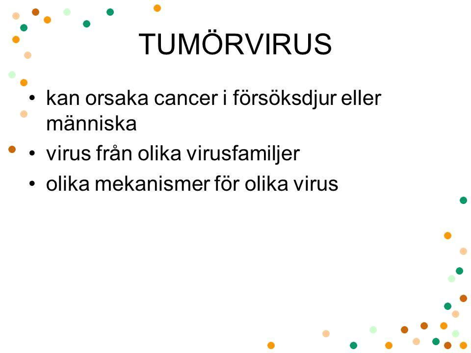 TUMÖRVIRUS kan orsaka cancer i försöksdjur eller människa