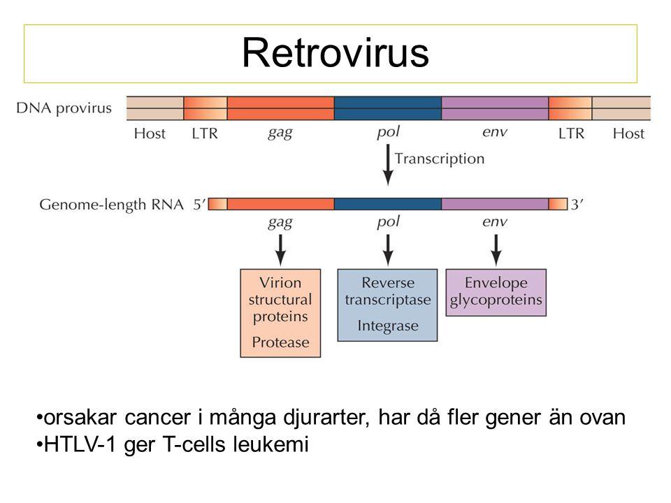 Retrovirus orsakar cancer i många djurarter, har då fler gener än ovan