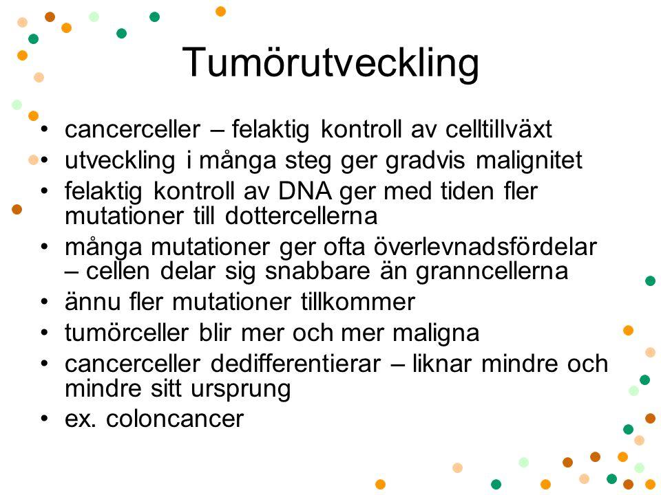 Tumörutveckling cancerceller – felaktig kontroll av celltillväxt