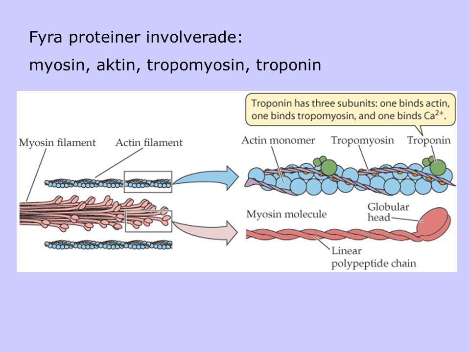 Fyra proteiner involverade: