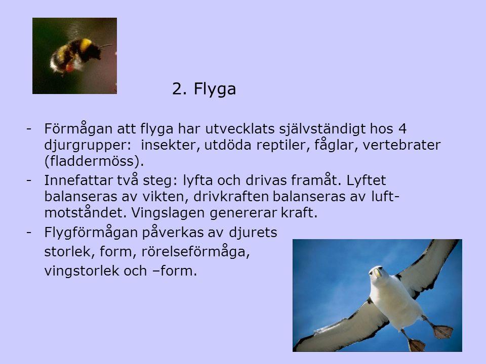 2. Flyga Förmågan att flyga har utvecklats självständigt hos 4 djurgrupper: insekter, utdöda reptiler, fåglar, vertebrater (fladdermöss).