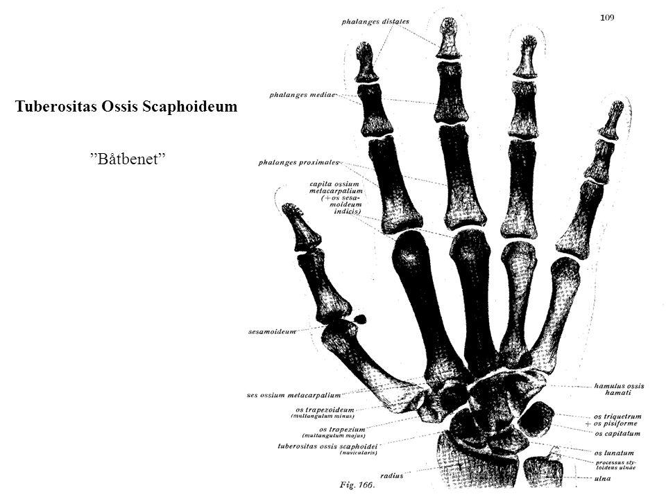 Tuberositas Ossis Scaphoideum