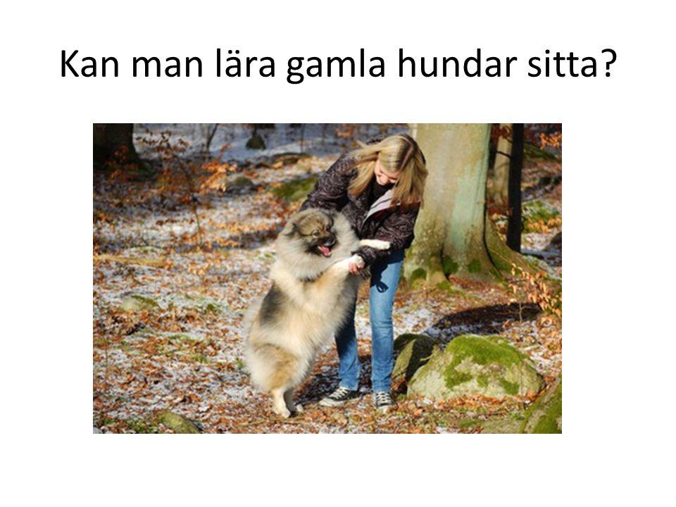 Kan man lära gamla hundar sitta