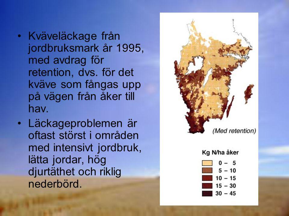 Kväveläckage från jordbruksmark år 1995, med avdrag för retention, dvs
