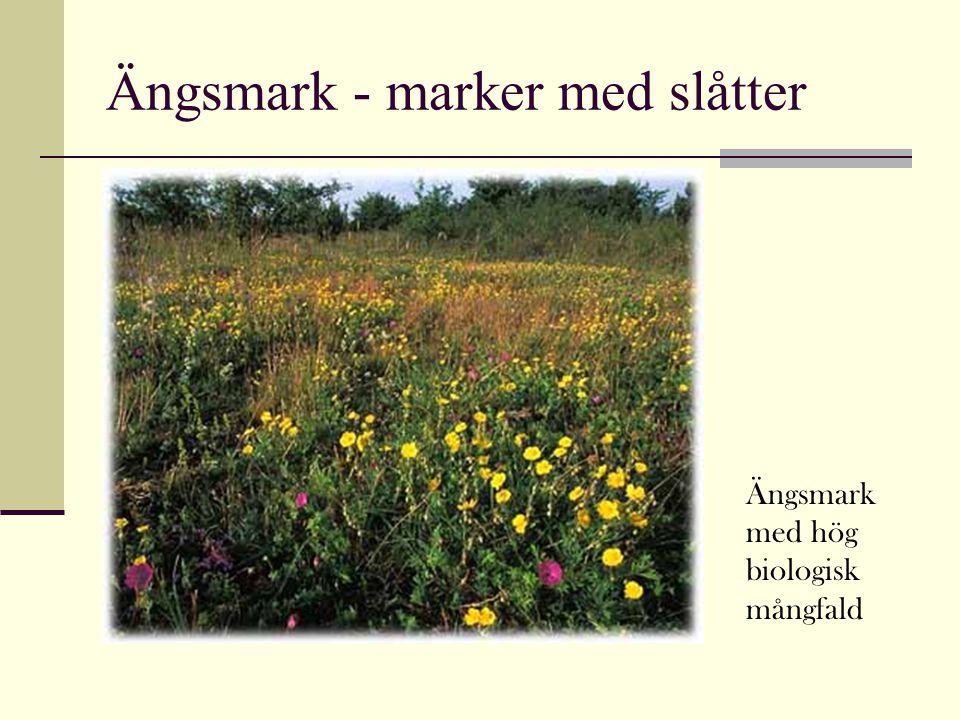 Ängsmark - marker med slåtter