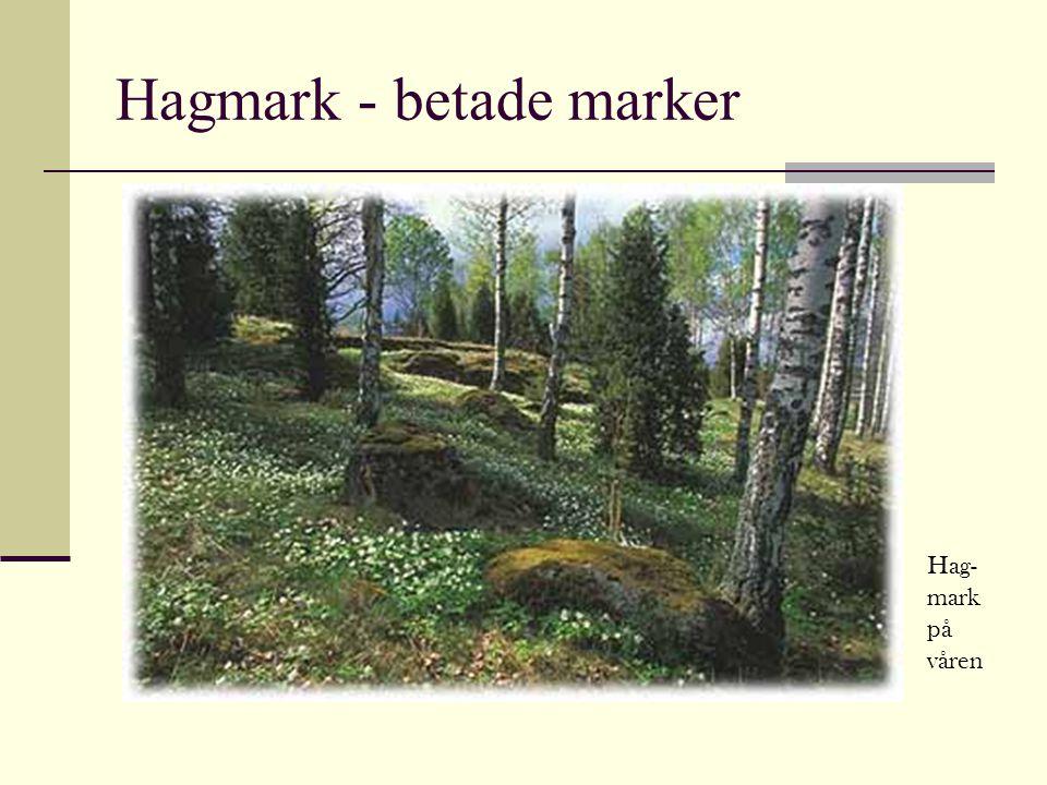 Hagmark - betade marker