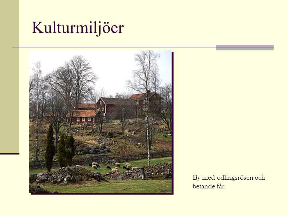 Kulturmiljöer By med odlingsrösen och betande får