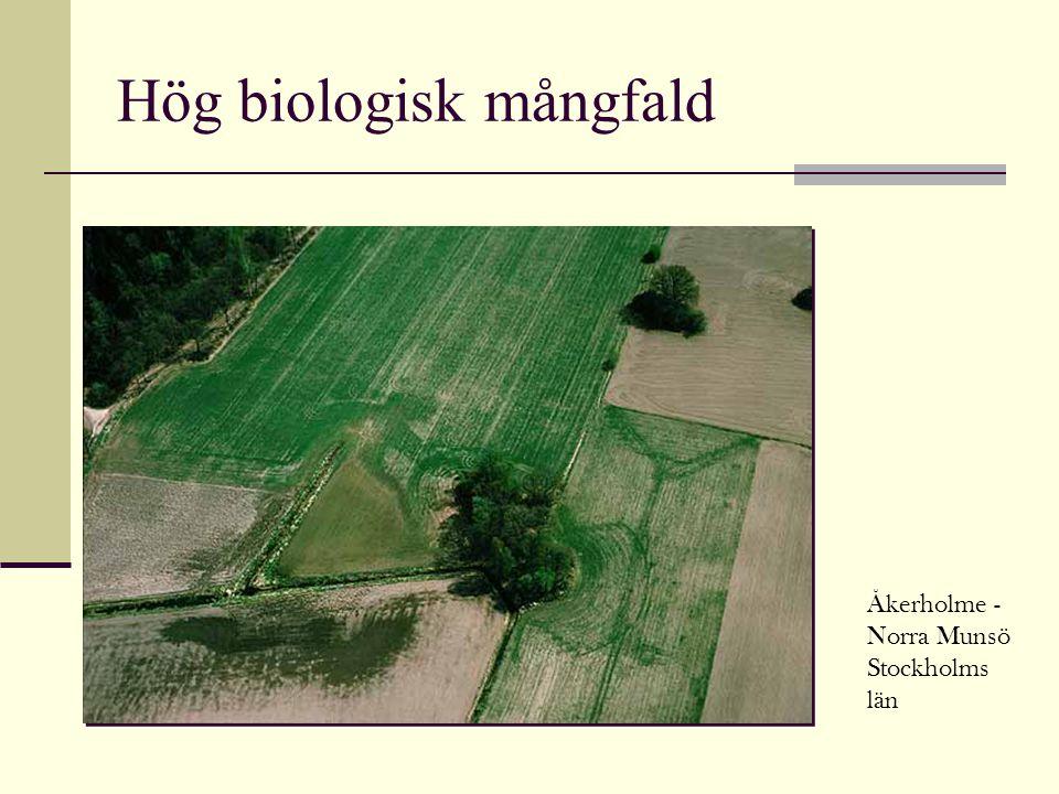Hög biologisk mångfald