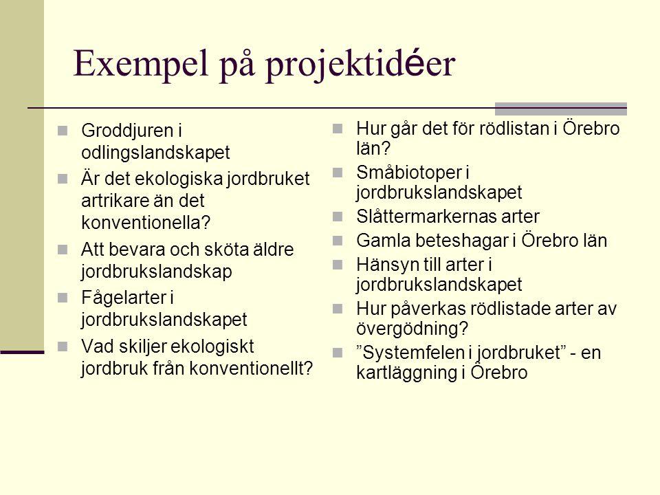 Exempel på projektidéer