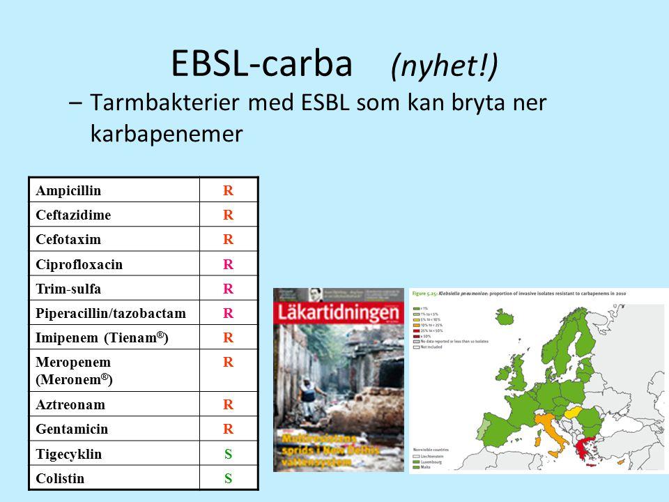 EBSL-carba (nyhet!) Tarmbakterier med ESBL som kan bryta ner karbapenemer. Ampicillin. R. Ceftazidime.
