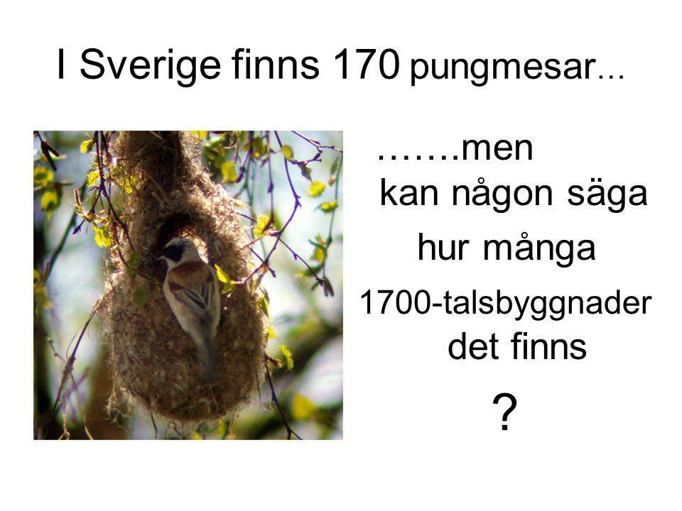 I Sverige finns 170 pungmesar…