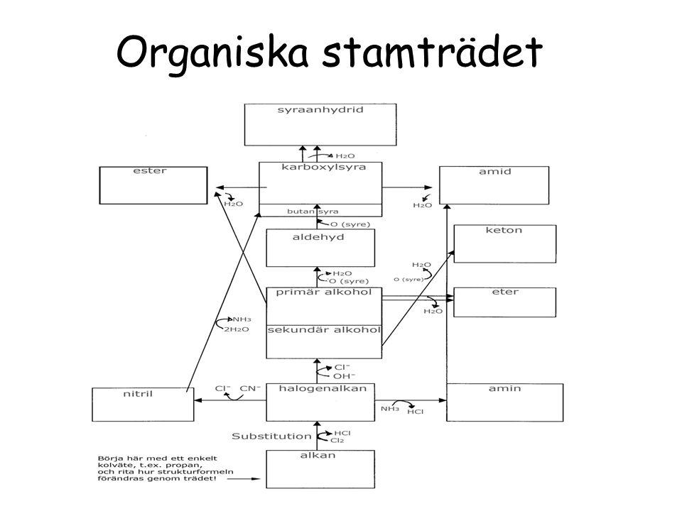 Organiska stamträdet Dela ut blad med organiska stamträdet.
