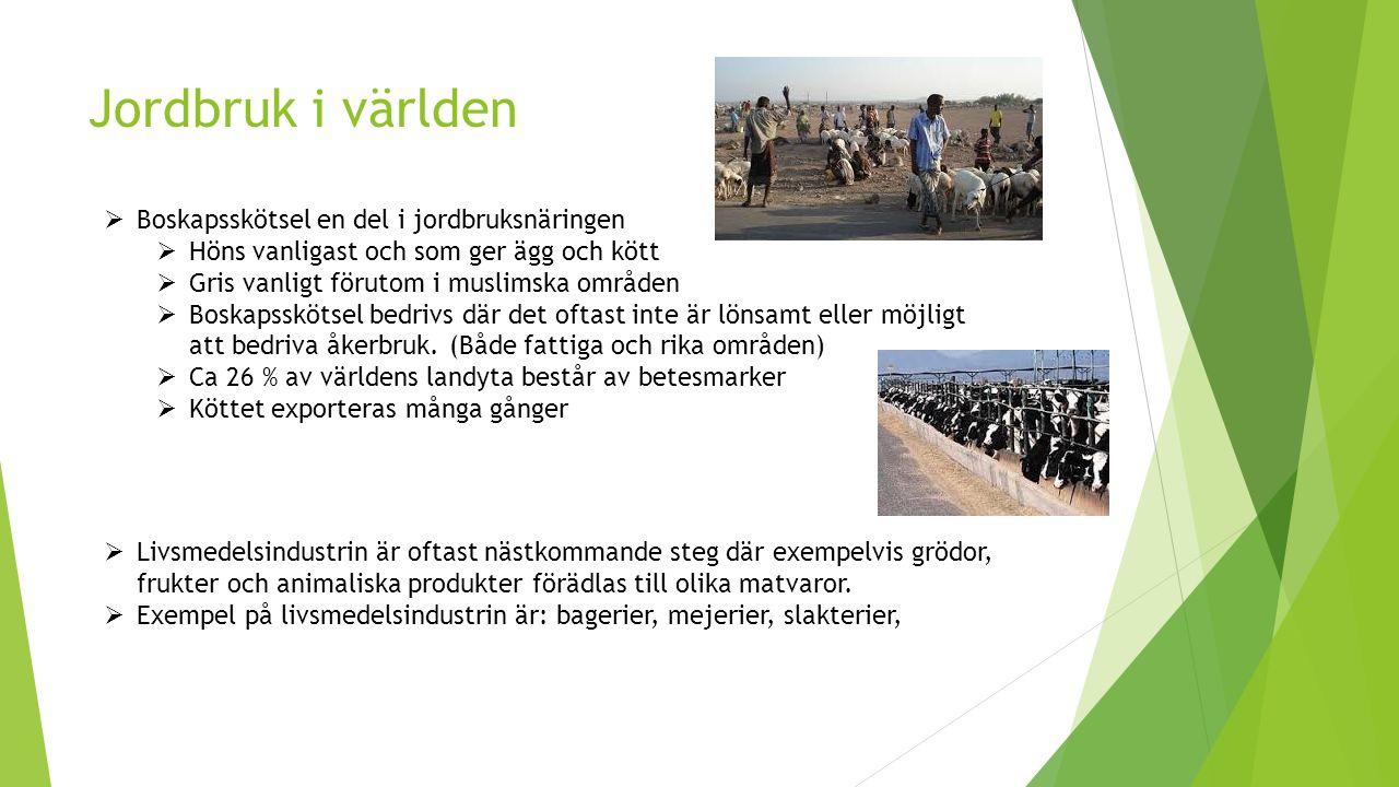 Jordbruk i världen Boskapsskötsel en del i jordbruksnäringen
