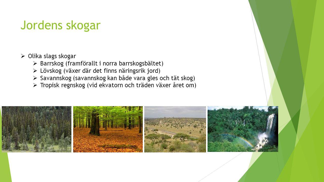 Jordens skogar Olika slags skogar