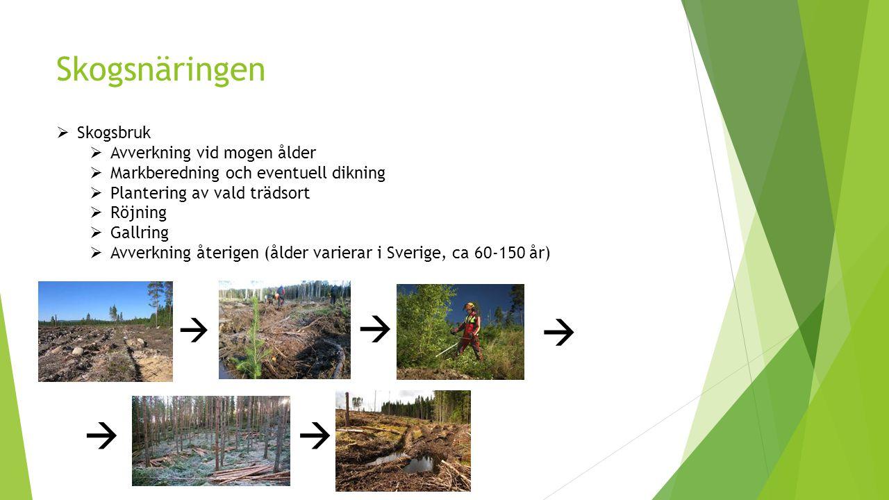     Skogsnäringen  Skogsbruk Avverkning vid mogen ålder