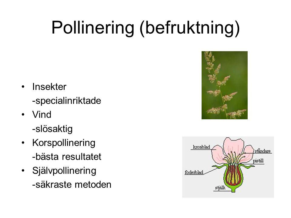 Pollinering (befruktning)
