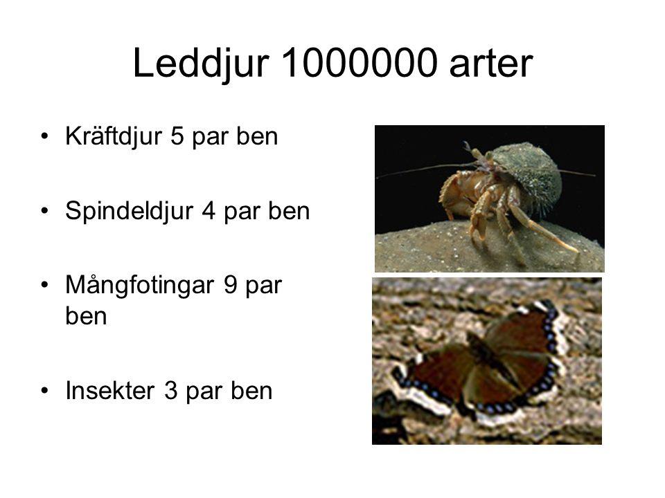 Leddjur 1000000 arter Kräftdjur 5 par ben Spindeldjur 4 par ben