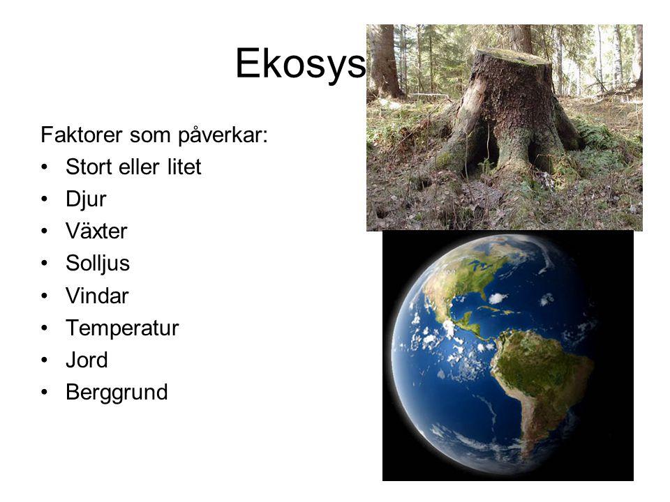 Ekosystem Faktorer som påverkar: Stort eller litet Djur Växter Solljus