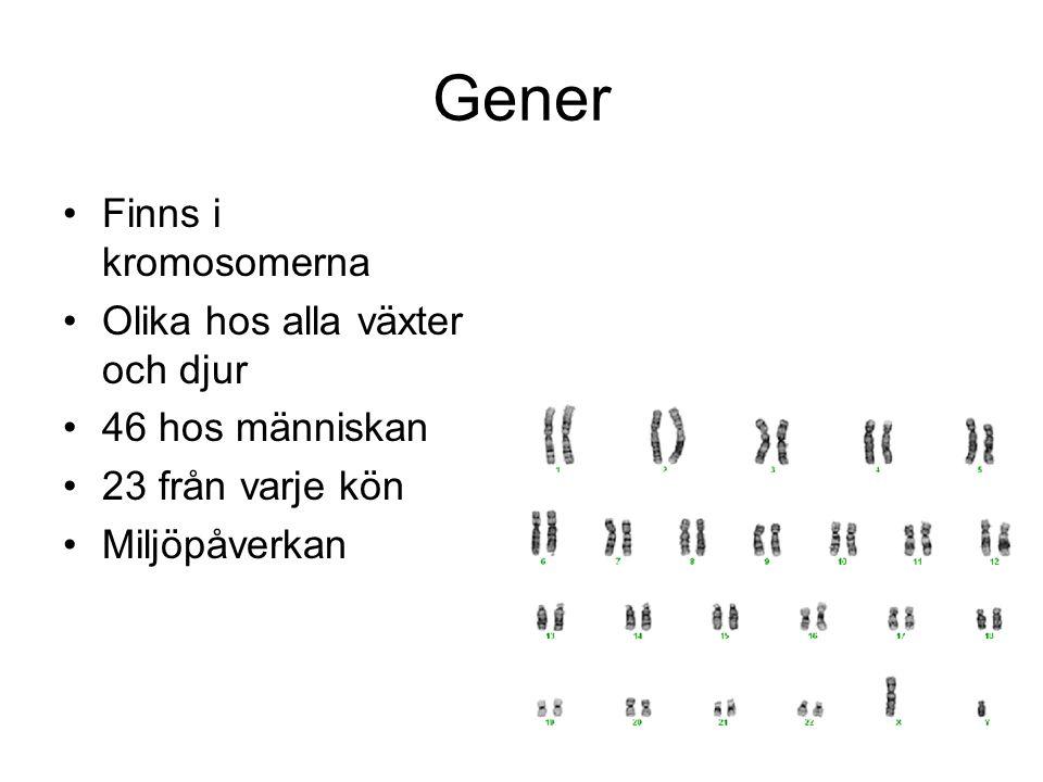 Gener Finns i kromosomerna Olika hos alla växter och djur
