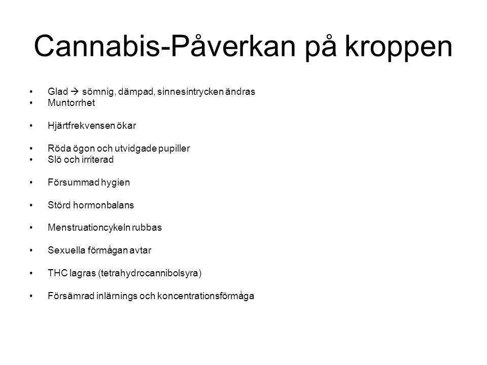 Cannabis-Påverkan på kroppen